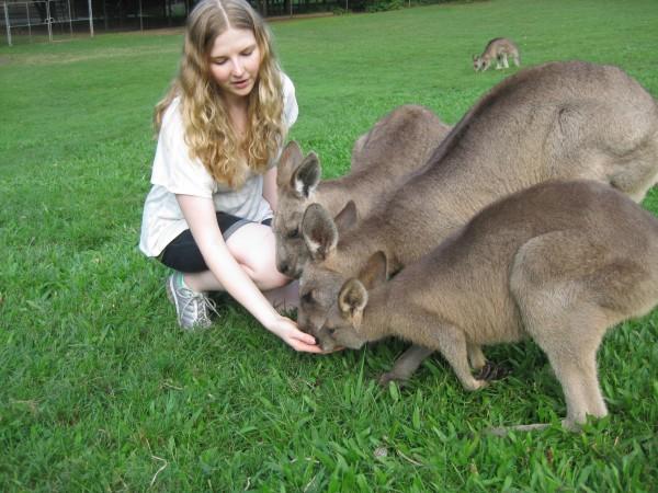 kanga feeding
