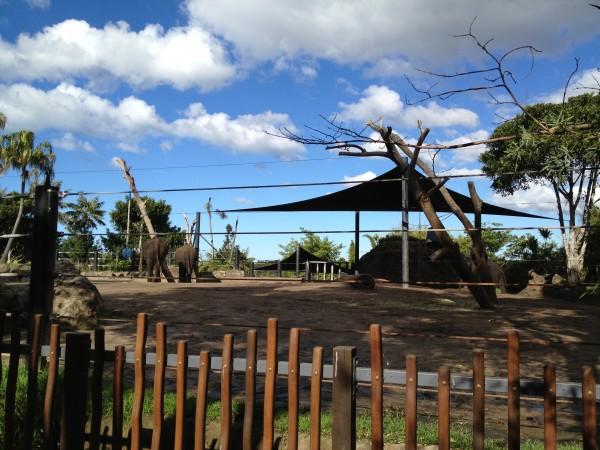 Elephants at Taronga Zoo, Sydney, Australia