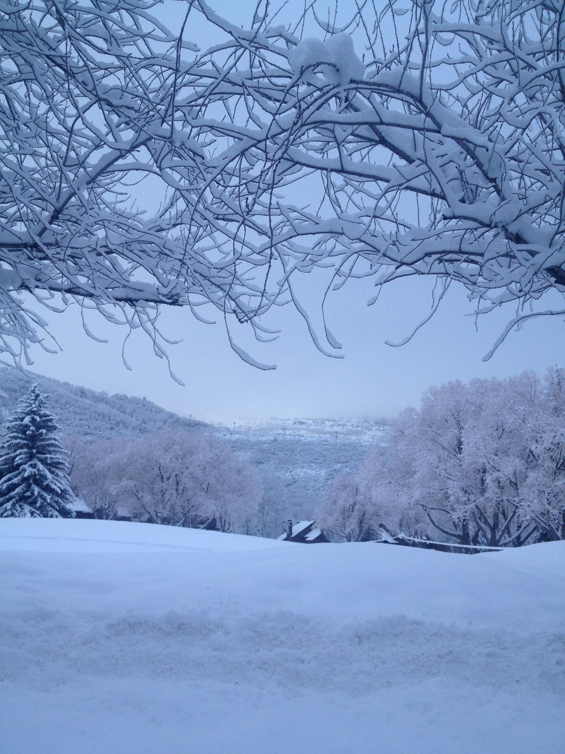 Snowy Trees in Park City, Utah