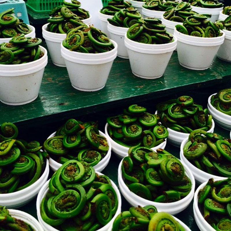 Fiddlehead Ferns, Byward Market, Ottawa