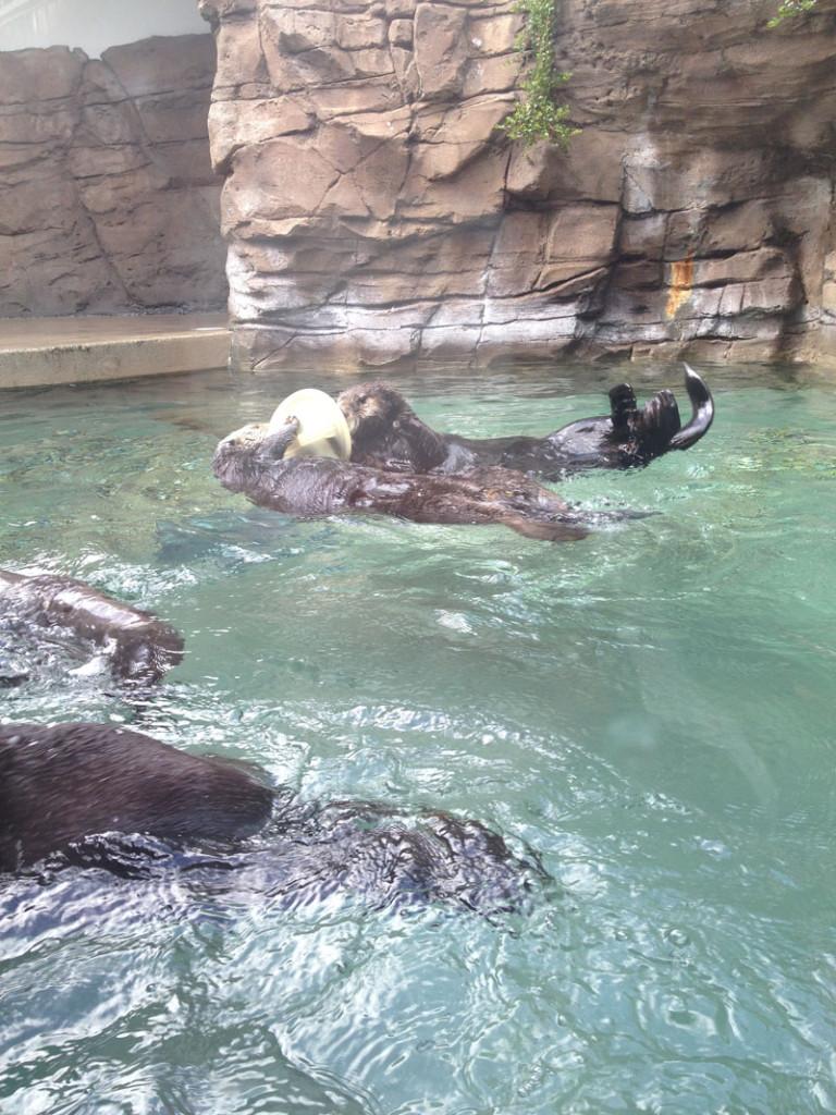 Otters-Seattle-Aquarium, seattle kids activities