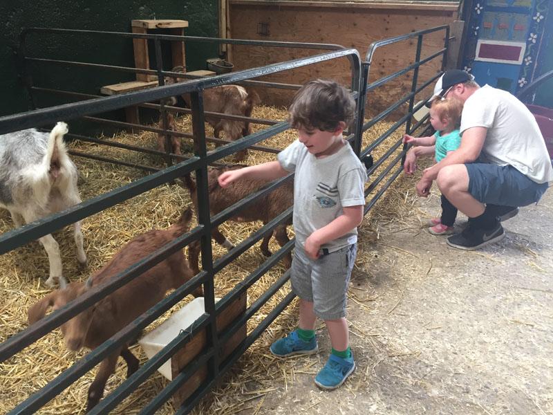Reuben Petting Goats, Valley View Animal Farm, Ottawa
