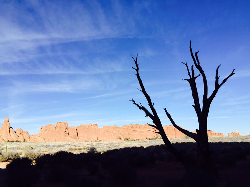 Tree, Arches National Park