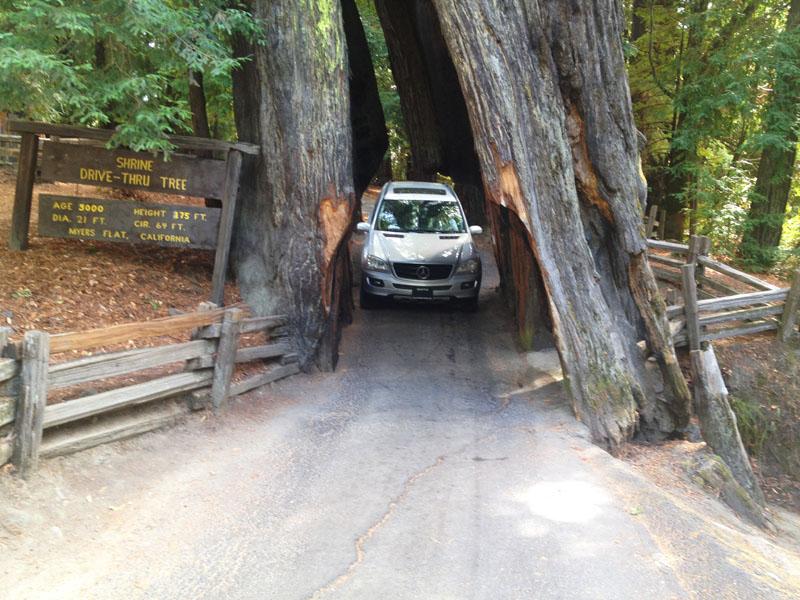 Drive Through Tree, Redwoods, California