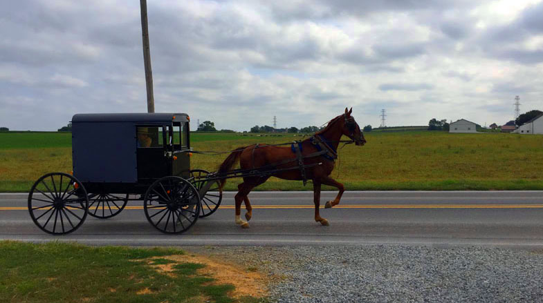 Amish Buggy and Horse, Lancaster Pennsylania, East Coast Road Trip