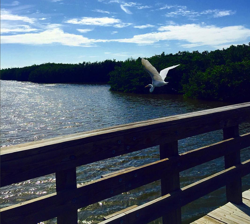 Florida Road Trip, Bird on Sanibel Island