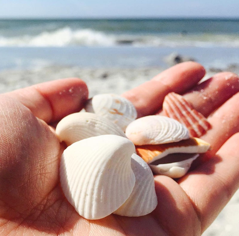 Florida Road Trip, Shells on Sanibel Island