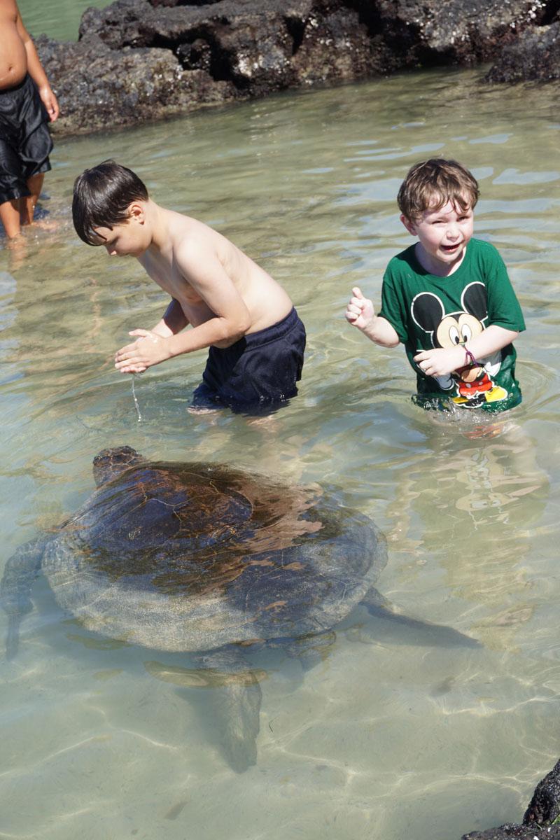 Reuben's Pure Joy at swimming with turtles Hawaii