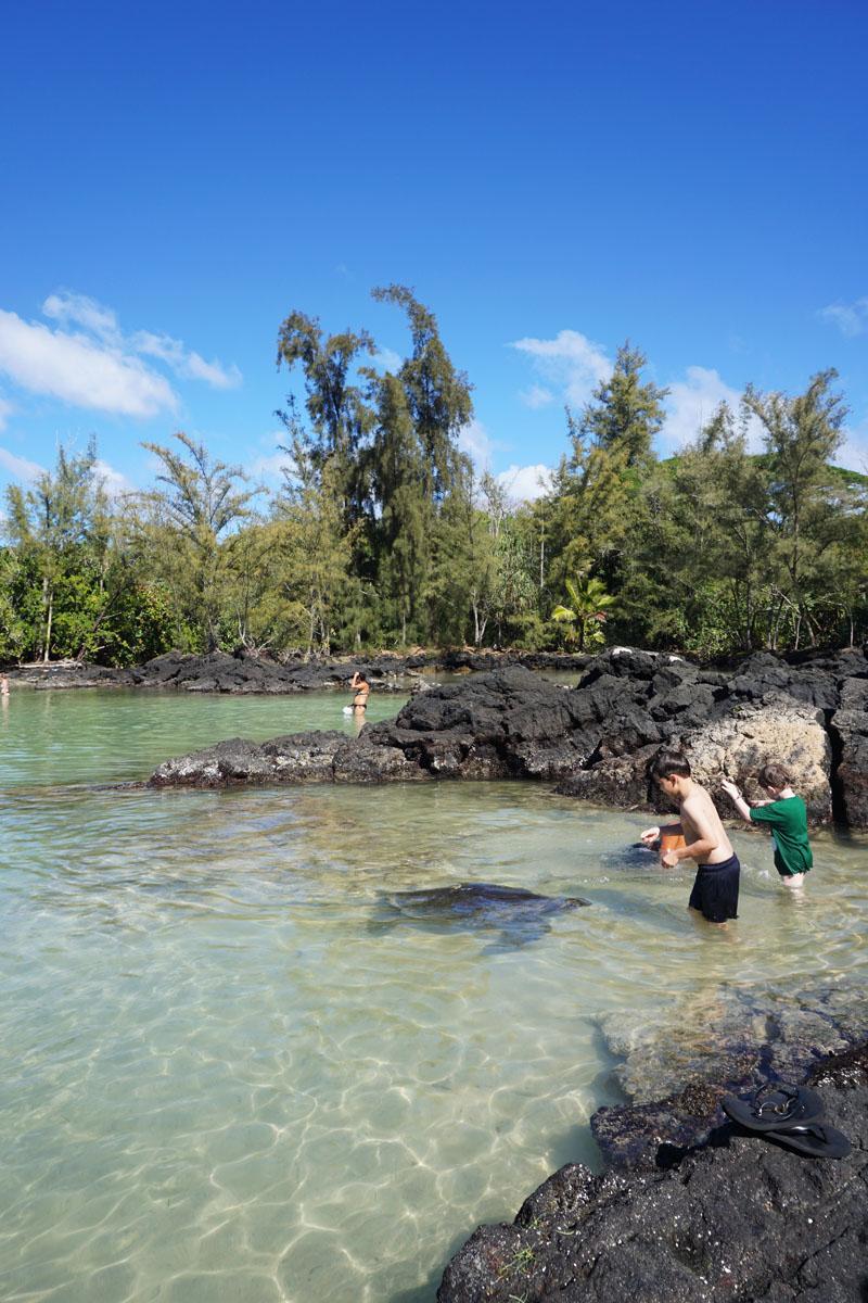 Swimming with Turtles, Carl Smith Beach Park, Hilo town, Big Island Hawaii
