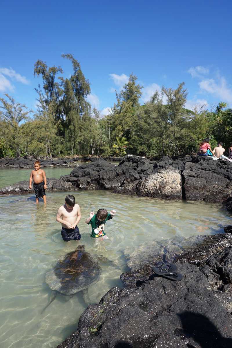 Where to see turtles in hawaii