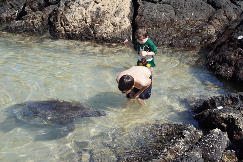 turtle beach big island hawaii