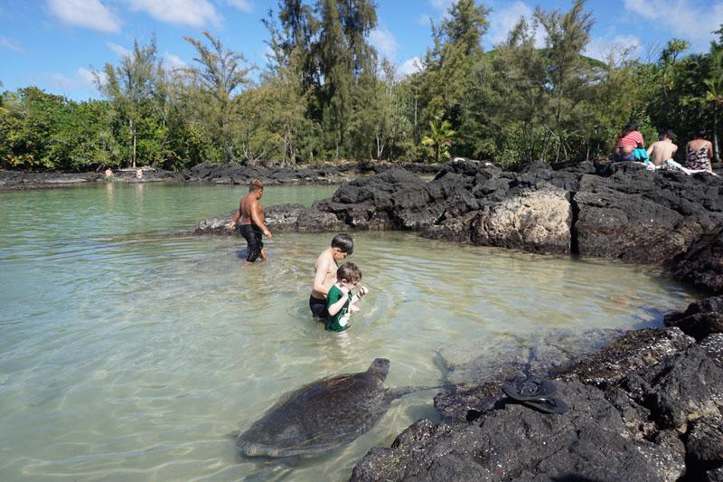 turtle beach hawaii big island