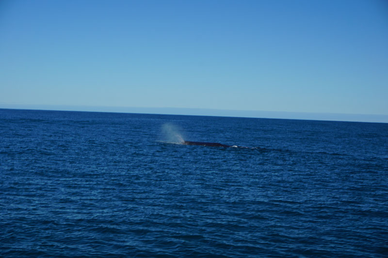 We Spied Our First Whale!