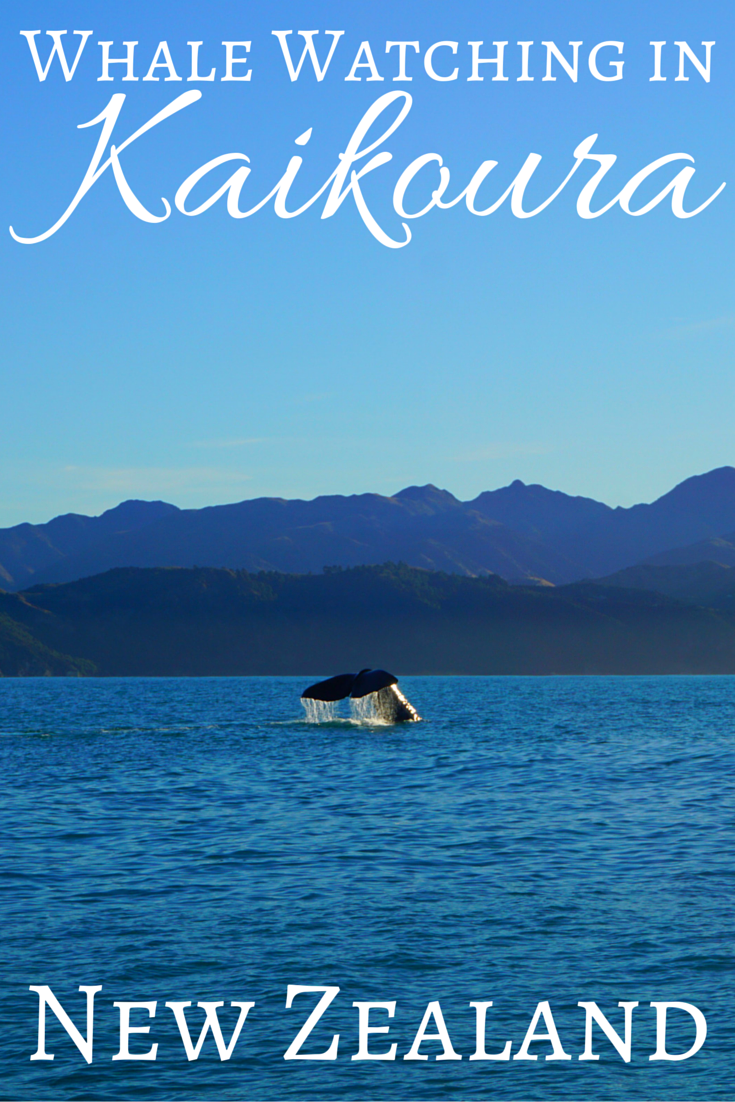 Whale Watching in Kaikoura New Zealand